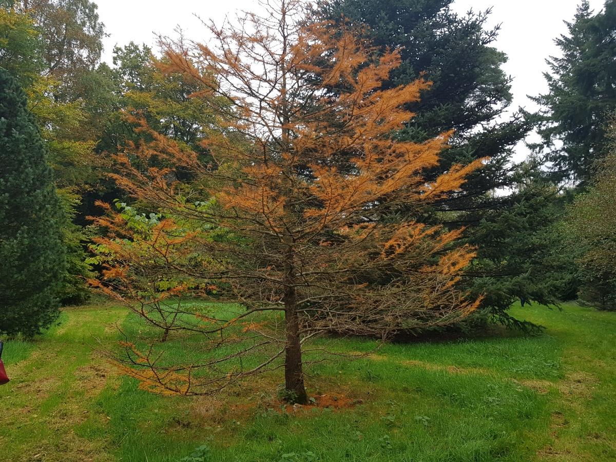 The secret arboretum